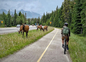 Want to cycle between Canmore and Banff? You can do it!