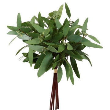 Long Eucalyptus Bundle