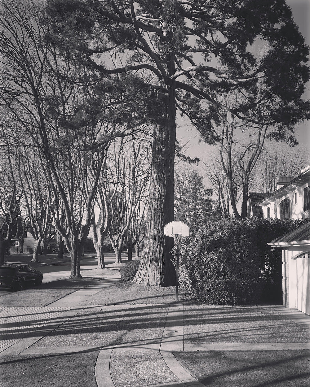 SPITGAN WEBZINE #3 Photo 5. Black and white photo of basketball court in Kerrisdale area and the impressive trees surrounding it. Vancouver BC