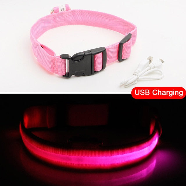 USB Charging Led Dog Collar Anti-Lost/Avoid Car Accident Collar For Dogs Puppies Dog Collars Leads LED Supplies Pet Products | nezzypuppers