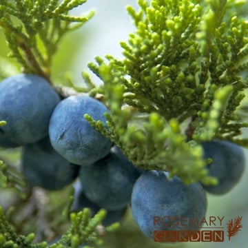 Organic Juniper Berry essential oil, 有機杜松果精油