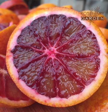 Organic Blood Orange hydrosol  Rosemary Garden美國迷迭香花園血橙純露