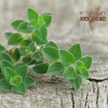 Oregano essential oil  Rosemary Garden 美國迷迭香花園奧勒岡精油