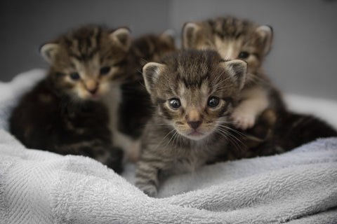 A litter of kitties should only be using organic litters.