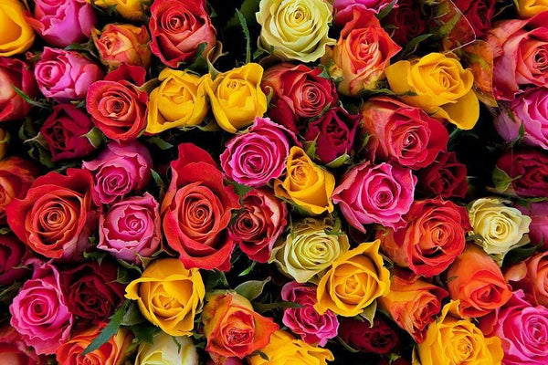 Different colour of roses meaning