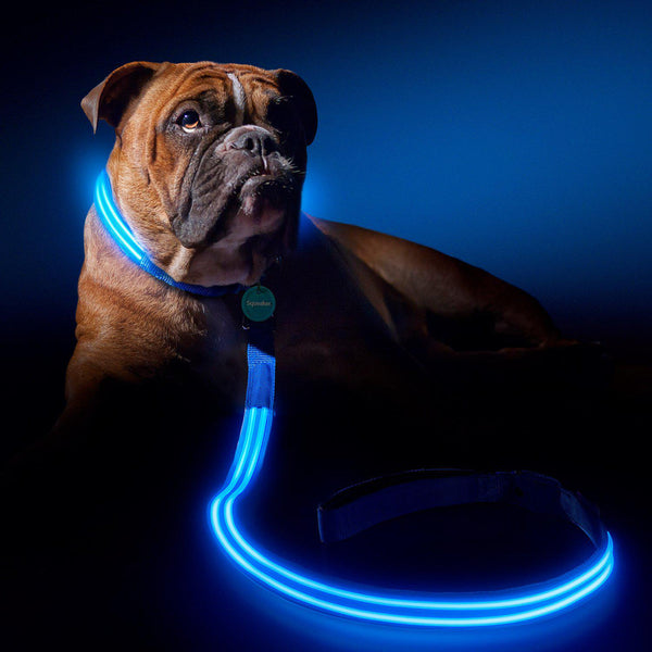 LED Dog Leash-Perfect For Pups