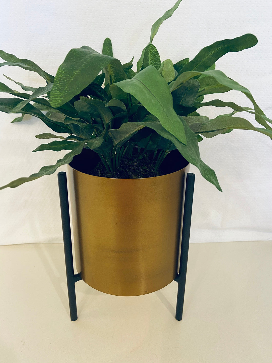 Gold Planter with Black Stand + Fern