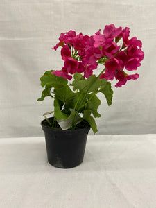 "10"" Pink Geranium Drop In"