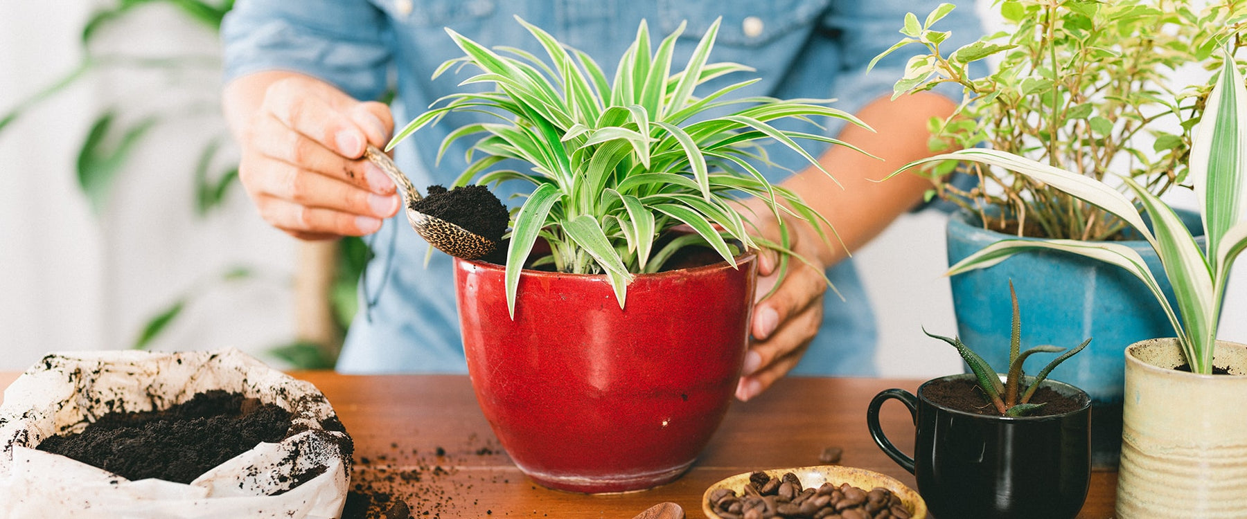 10 Creative and eco-friendly ways to reuse coffee grounds at home