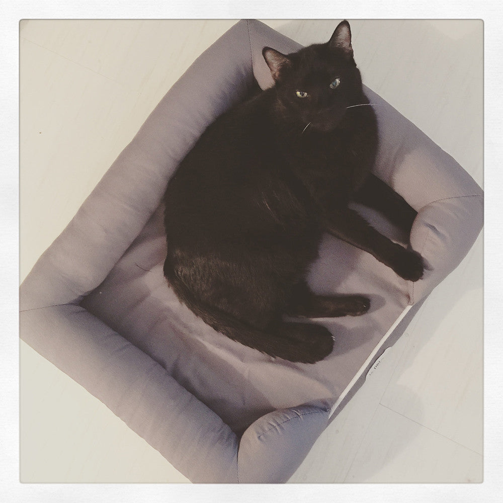 Ultimate Memory Foam Cat Bed From Petfusion Hauspanther