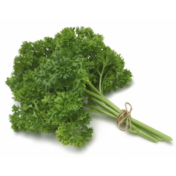Parsley Curly Bunch