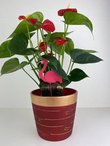 Anthurium Red Flamingo Flower 12cm Red & Gold Pot Gift