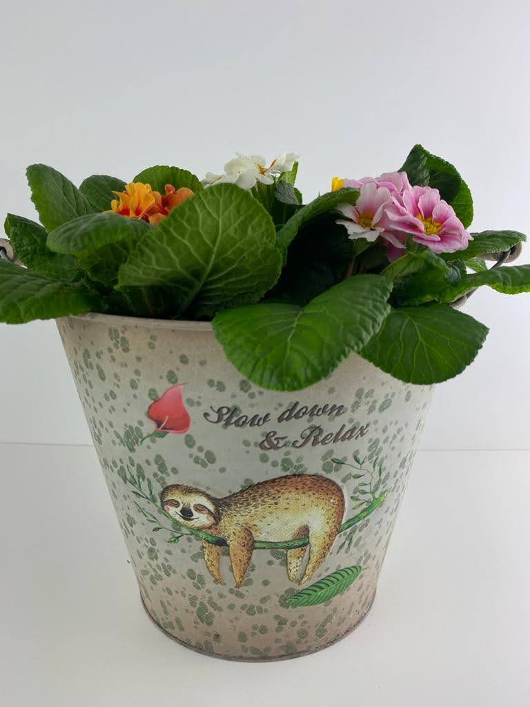 Primrose Planted Sloth Tin