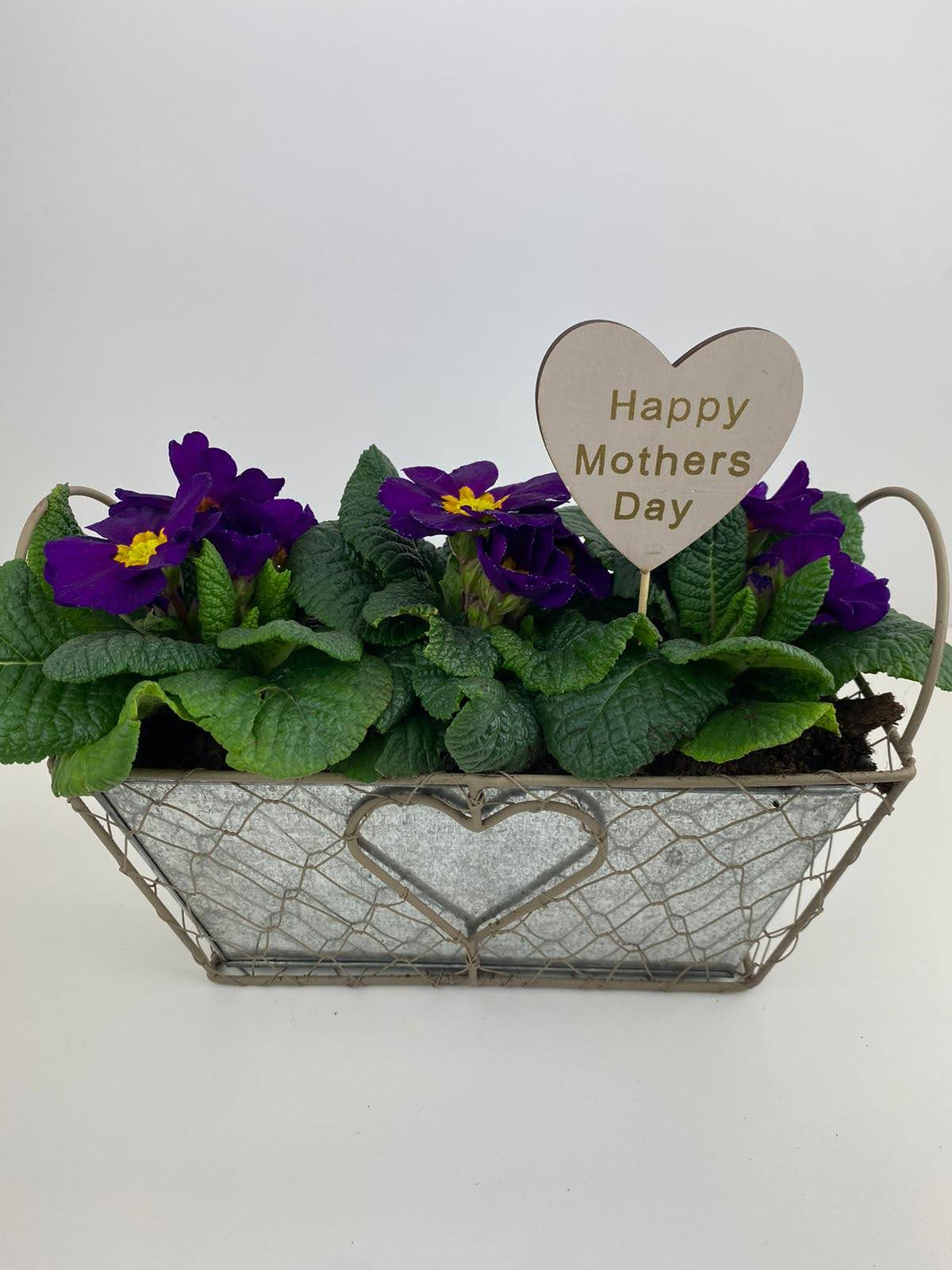 Mothers Day Purple Primrose Planted Heart Trough