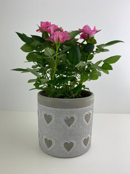 Mothers Day Pink Rose in Heart Ceramic Pot