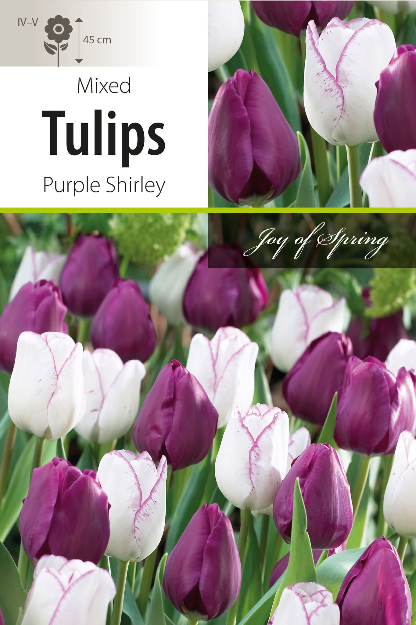 Tulip Purple Shirley Bulbs