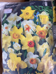 Daffodil & Narcissi Mixed Bulbs