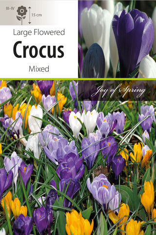 Crocus Mixed Large Flowered Bulbs