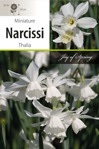 Narcissi Thalia Bulbs