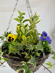 Seasonal Hanging Basket 12''