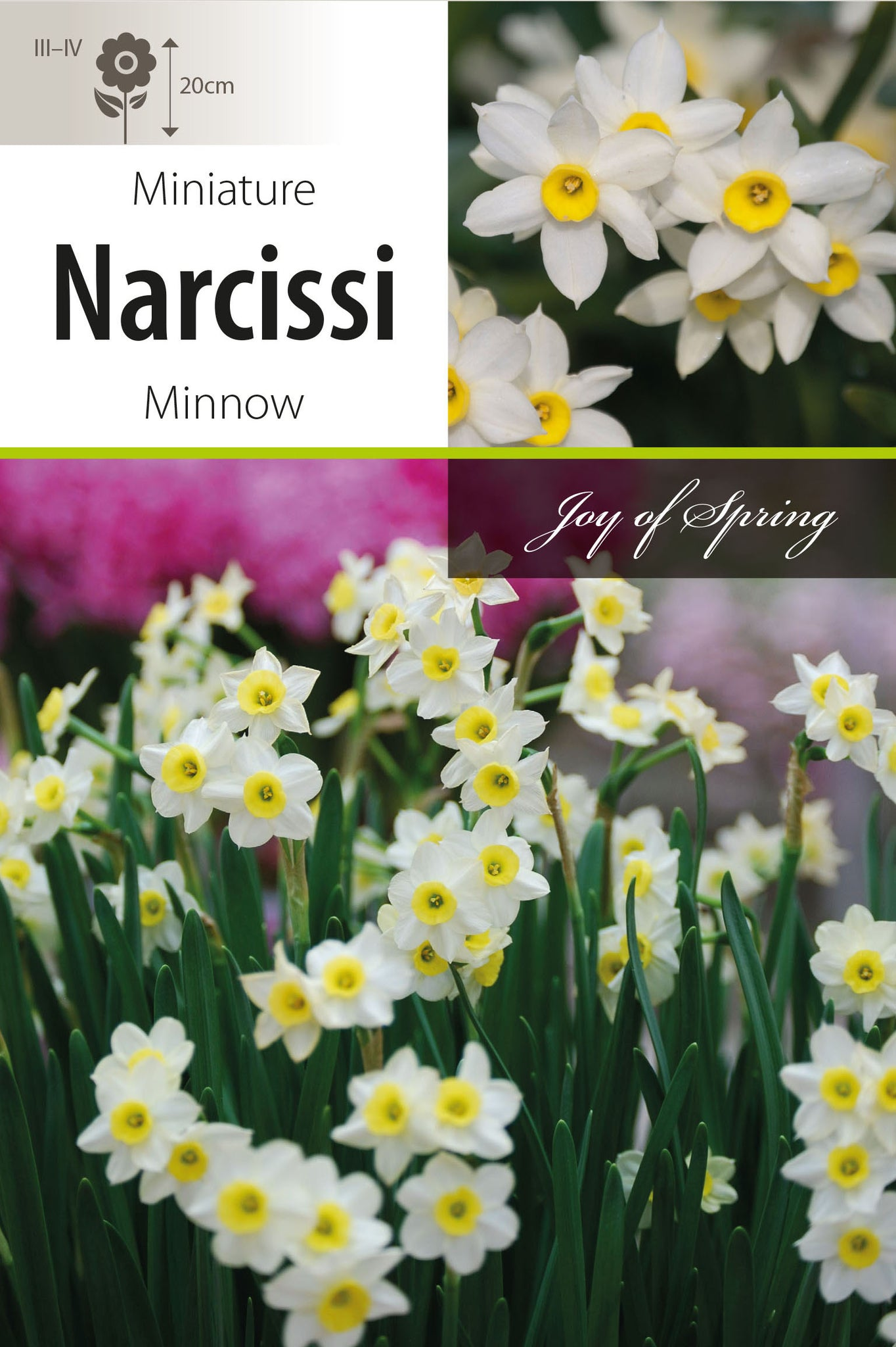 Narcissi Minnow Bulbs