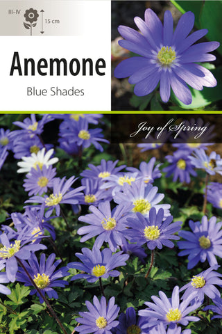 Anemone Blue Shades Bulbs