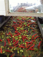 Cayenne Chili Pepper Fused Olive Oil