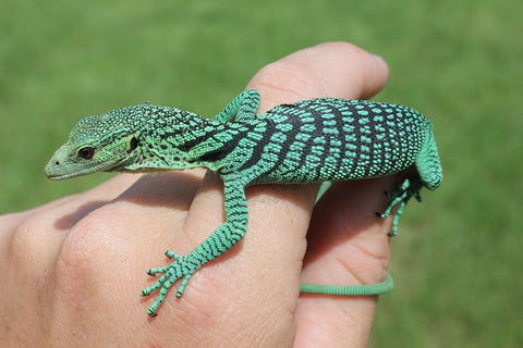 Blue Green Tree Monitor Baby