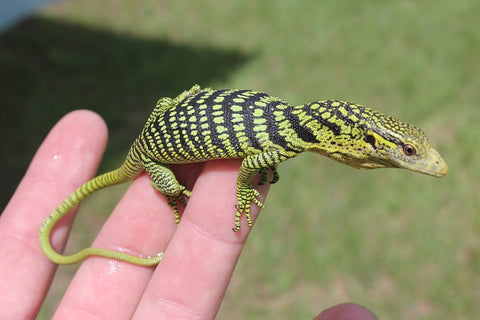 Yellow Tree Monitor Baby