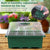 Nursery Seedling Grow Box