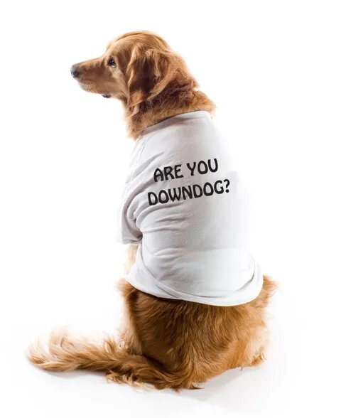 Are You Downdog?
