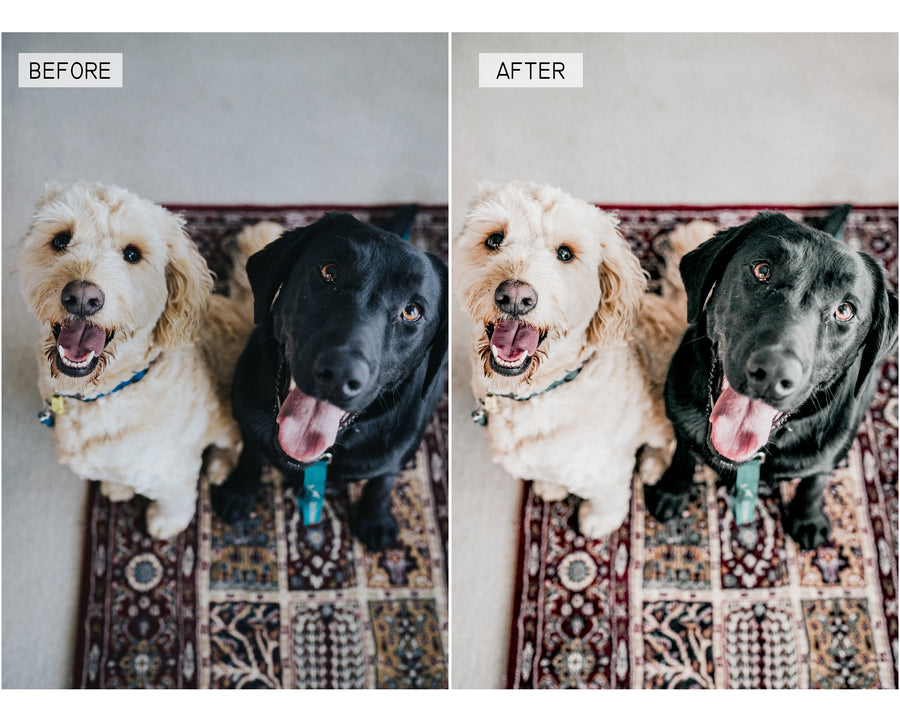 Dog Days Desktop Lightroom Presets - Hyggely Presets and Branding