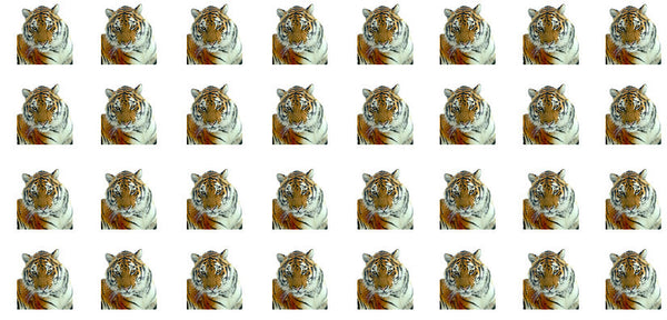 Staring Tiger waterslide nail decals