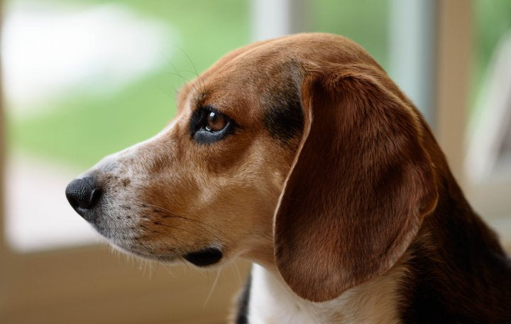 Top Five Dog Breeds