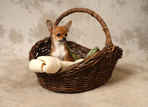 give your dog a treat inside of the basket