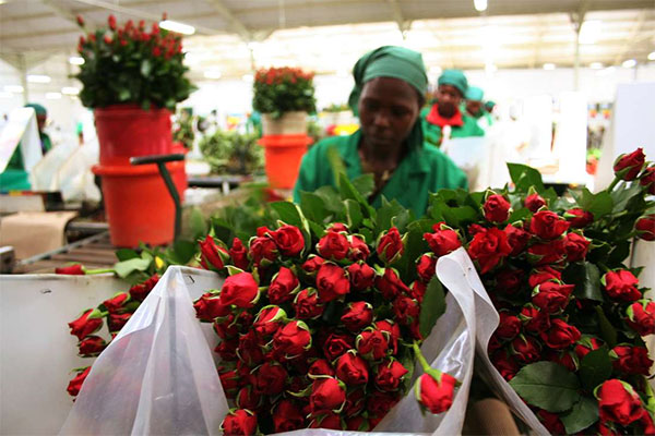 Black in Business: Kenya Makes Over $1Bn From Flowers' Exports In 10 Months