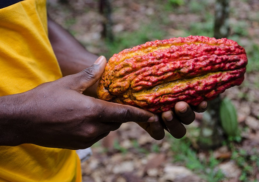 Feature News: Ghana, Ivory Coast Accuse U.S. Chocolate Giants Of Not Paying Fair Bonus To Cocoa Farmers