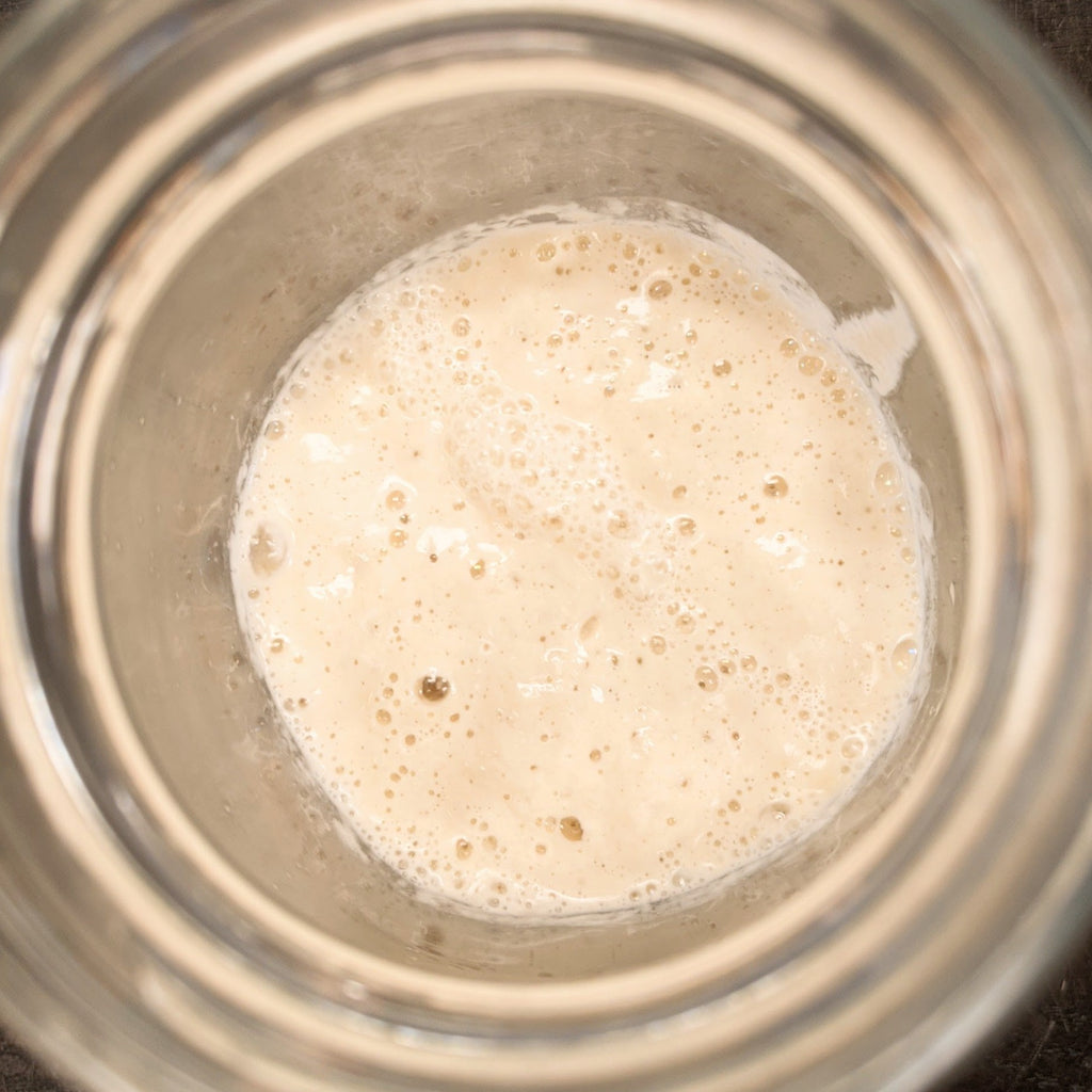 Georgia Sourdough Co. Sourdough Starter