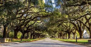 Boone Hall Plantation Gets Conservation Easement