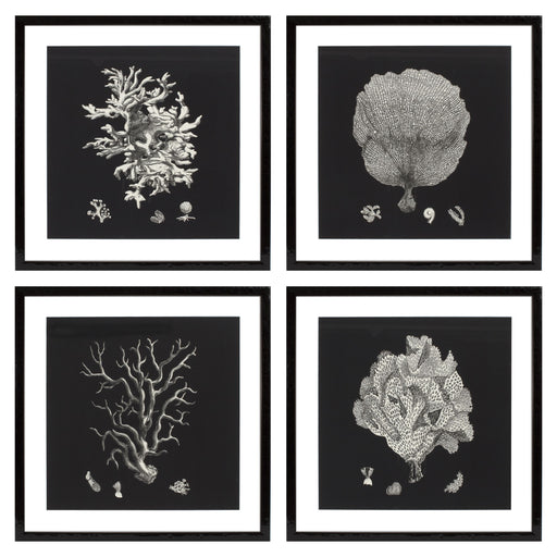 Black & Tan Corals set of 4 Prints   by Eichholtz | Modern Lighting + Decor
