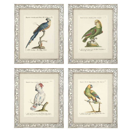 Dunbar I set of 4 Prints   by Eichholtz | Modern Lighting + Decor