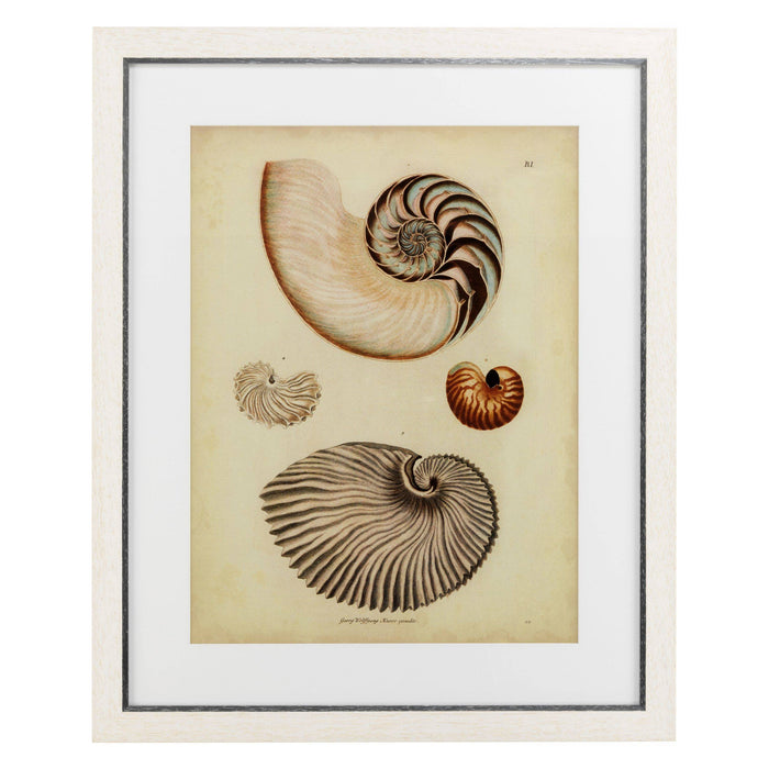 Buy online latest and high quality Antique Nautilus set of 2 Prints from Eichholtz | Modern Lighting + Decor
