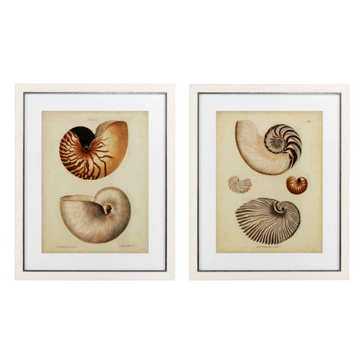 Antique Nautilus set of 2 Prints   by Eichholtz | Modern Lighting + Decor