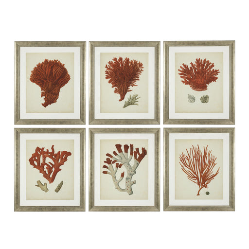 Antique red corals set of 6 Prints   by Eichholtz | Modern Lighting + Decor
