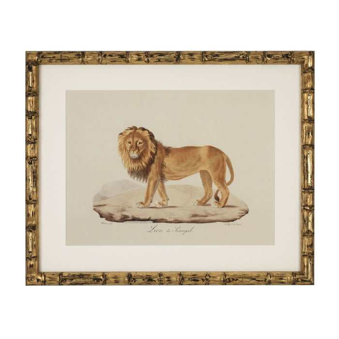Buy online latest and high quality Lion, Tigre, Jaguar set of 6 Prints from Eichholtz | Modern Lighting + Decor