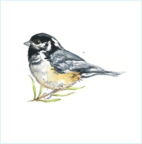 coal tit tile
