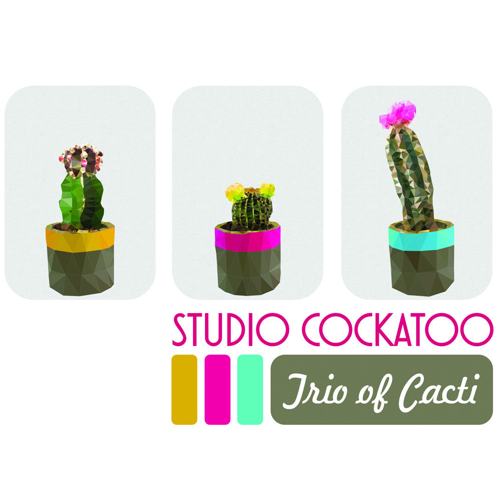 cacti gift pack