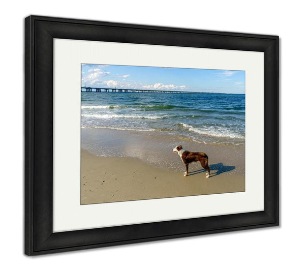 Framed Print, Border Collie At The Beach - Paws & Play