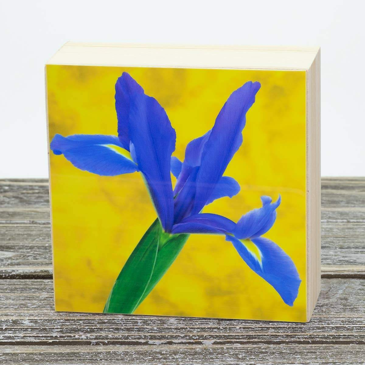 Iris Aluminum Photo on Wood Block art print ANVIL metals studio