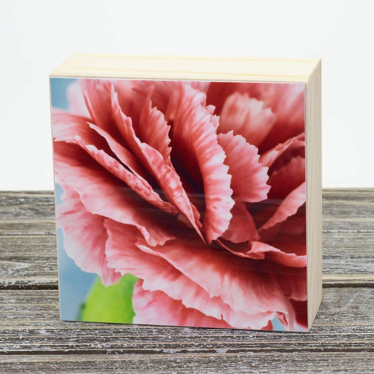 Carnation Aluminum Photo on Wood Block art print ANVIL metals studio
